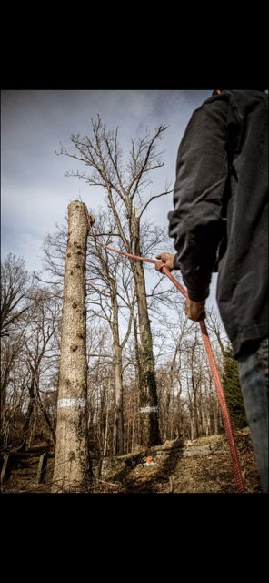 tree removal crestview hills ky