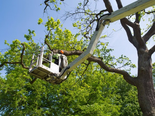 tree trimming, independence ky