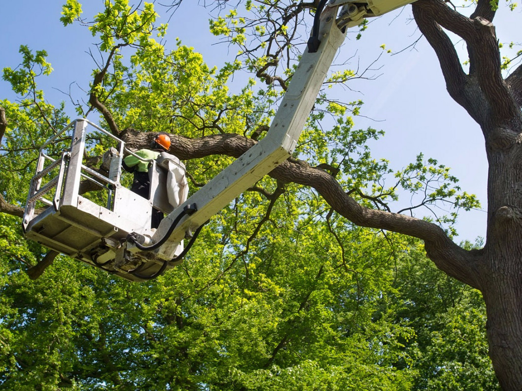 Tree trimming services in the Crestview Hills & Fort Mitchell, KY